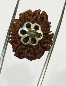 10 Mukhi Certified Rudraksha Silver Pendant (Nepal Origin) Medium Size