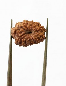 12 Mukhi Certified Indonesian Rudraksha  Size- 18.50 mm