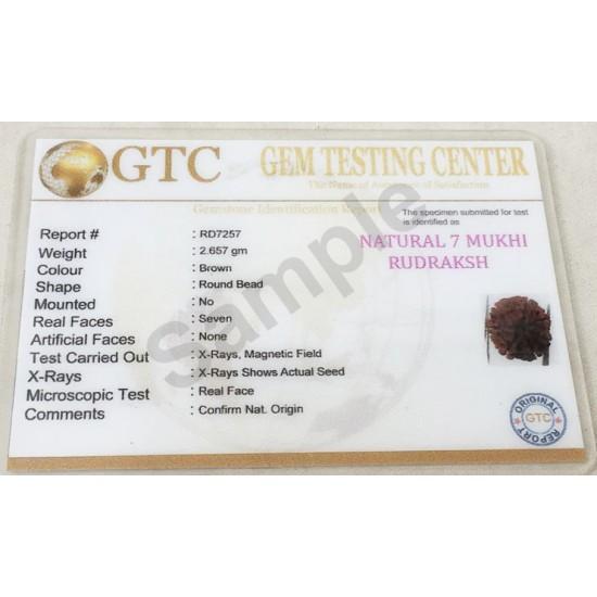 7 Mukhi Certified Nepali Rudraksha Size- 17 to 20 mm